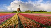 Фонтан красок и цветов!