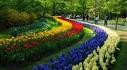 Парк квітів Койкенхоф в 2019 році  21.03 по 19.05