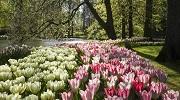 Один з самих гарних парків квітів Кекенхоф запрошує з 21.03.2019 по 19.05.2019!!