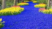Парк квітів Кекенхоф в 2019 році