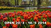 Свято квітів в Кейкенхофі