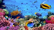 Великий фестиваль  водних видів спорту та музики ...