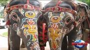 Незбутня  Шрі-Ланка