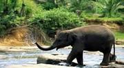 Відпочинь на Шрі Ланці!!!