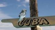 Гарячі Кубинські канікули