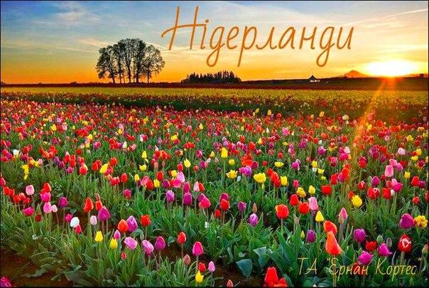 Путешествие в страну тюльпанов!
