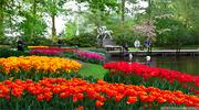 В Нидерландах королевский парк цветов открывает новый сезон