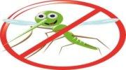 Как уберечься от укусов комаров: практические советы