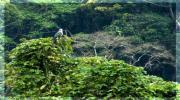 Синхараджа. Ливневый лес